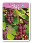 女宣雜誌 Lusoan Magazine  393期  2011年  5月 聖靈